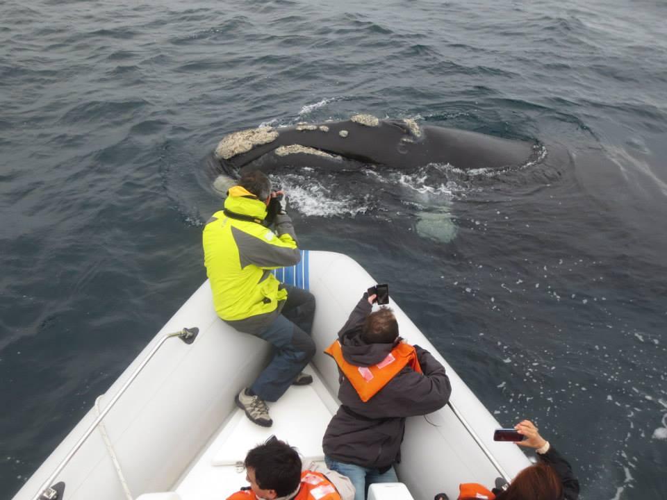 Patagonie Peninsule Valdes Baleines