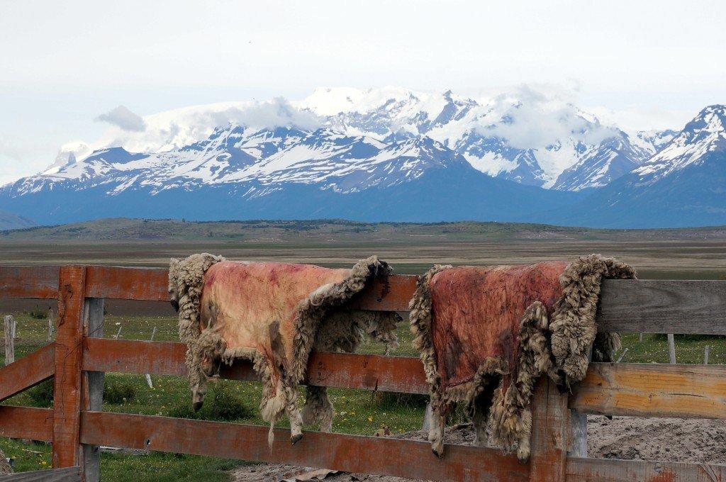 Patagonie Estancia _ranch argentin