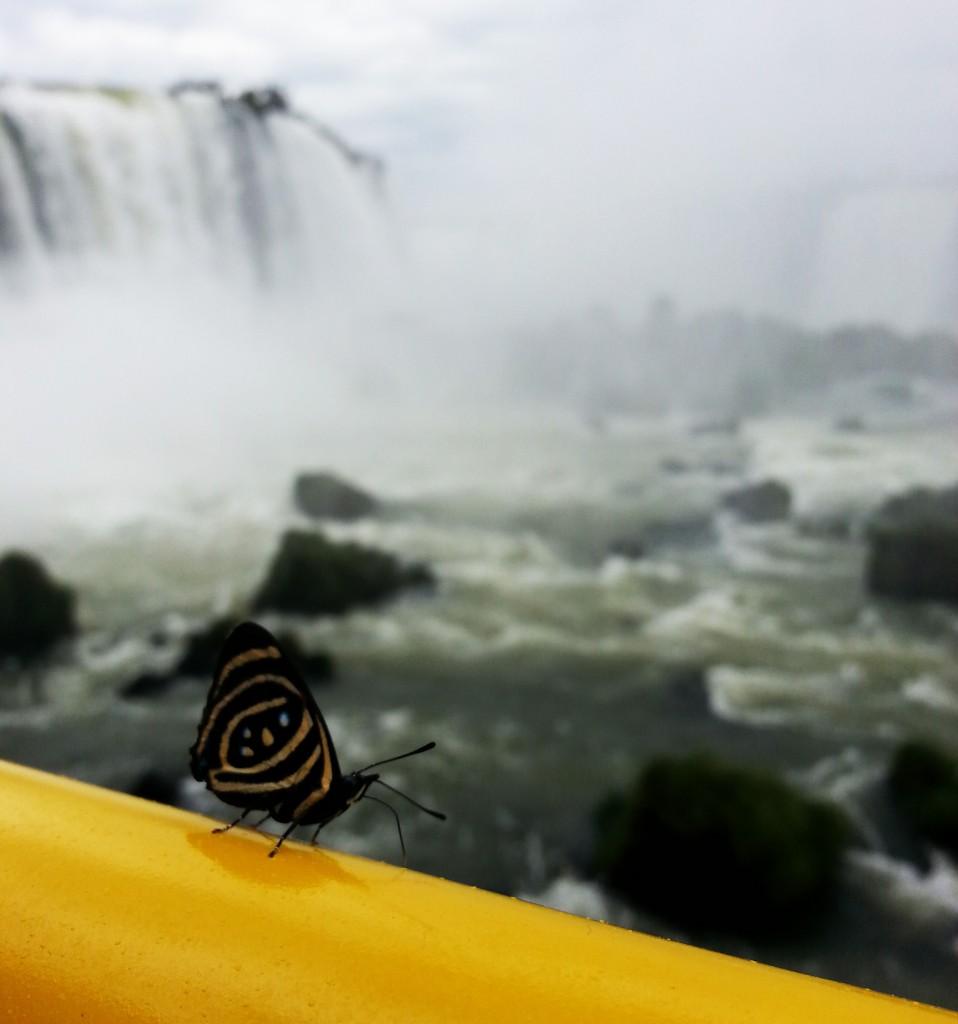 TierraLatina_Iguazu_Argentine-Voyage-Sur-Mesure_papillon