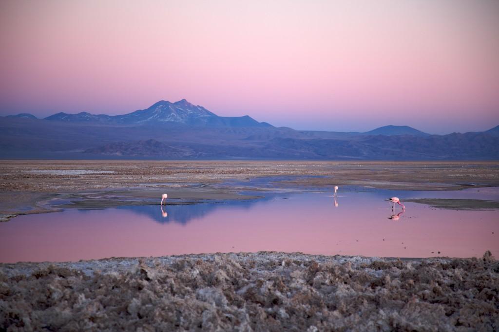 Chili voie lactee dans le desert Atacama