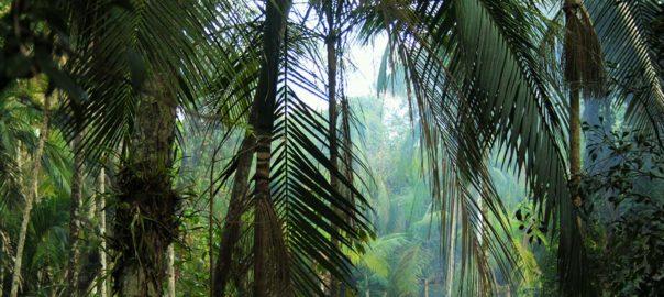 Iguazu ecolodge jungle Argentine Brésil Voyage Tierra Latina