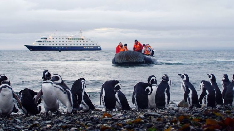 patagonia australis pingouin bateau
