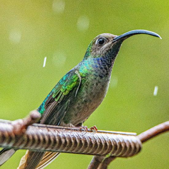 tierra-latina-mana5280-oiseau-faune-costa-rica