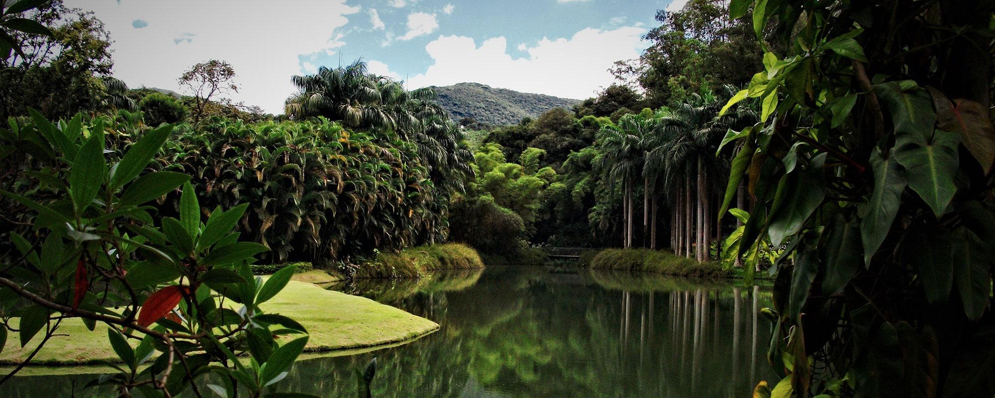 destination bresil foret amazonienne
