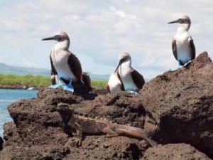 Equateur_voyage_sur_mesure_observation_animaux_iguane_Tierra_Latina