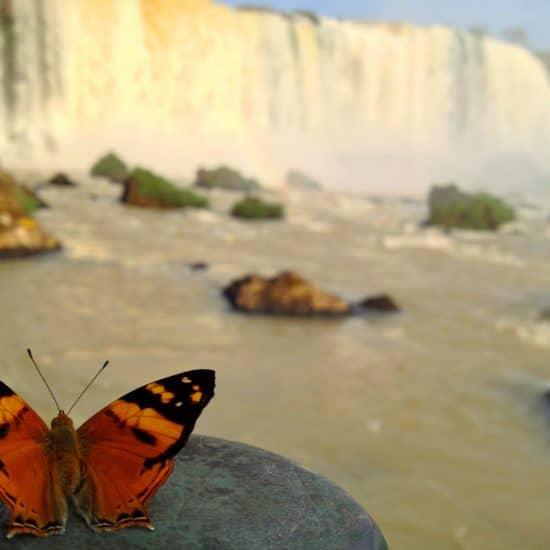 argentine parc national chute iguazu nature luxuriante verdoyant merveille proximité curiosité flore unesco patrimoine papillon