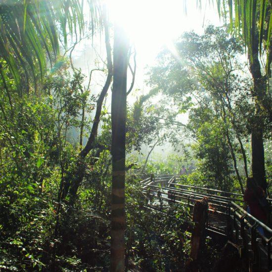 argentine Chutes Iguazu jungle immersion palmiers unesco parc national nature immersion passerelle