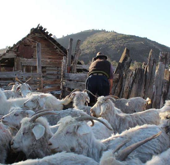 argentine patagonie bariloche ferme gaucho fermier biquette chèvre obejas
