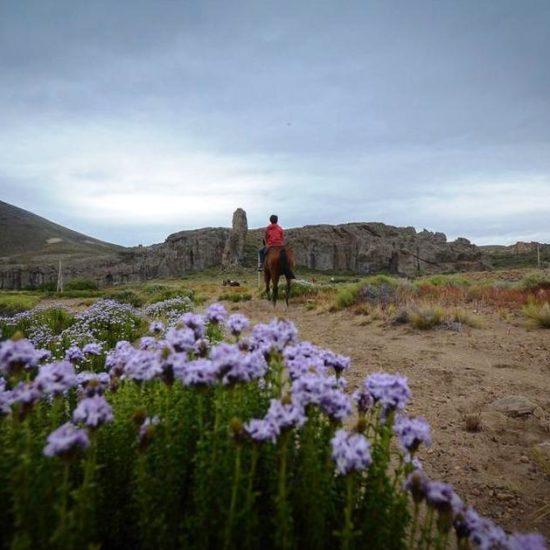argentine patagonie bariloche nature paysage montagne fleurs cheval balade