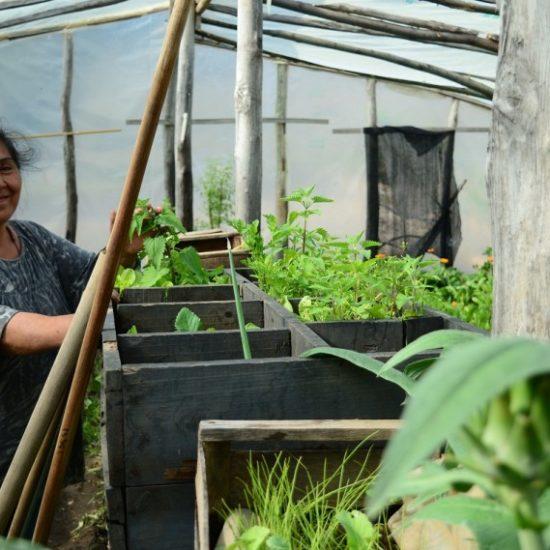argentine patagonie bariloche chez l'habitant communauté culture serre ferme potager