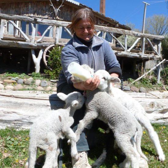 argentine patagonie bariloche gaucho immersion fermier nature chèvre allaitement mignon bébé