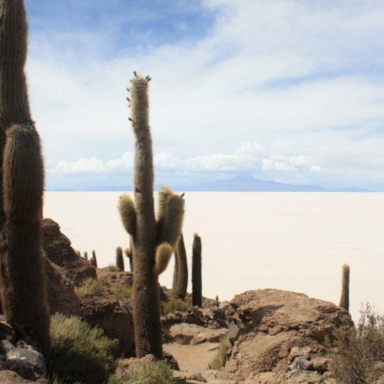 bolivie salar uyuni désert de sel nature curiosité naturelle cactus