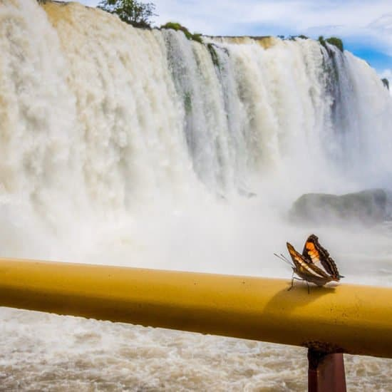 Chutes Iguazu jungle immersion papillon
