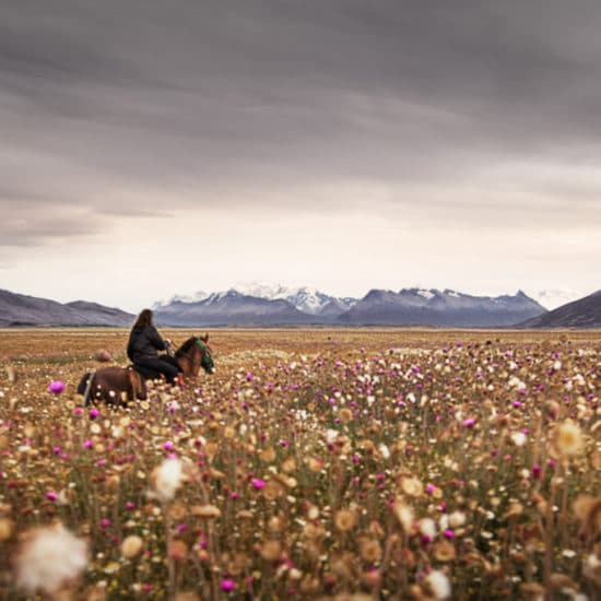 argentine patagonie estancia champs de fleurs cheval gauchos paysage nature immersion cavalier excursion balade excursion el calafate