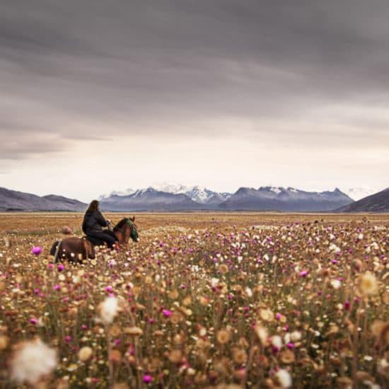 argentine patagonie estancia champs de fleurs cheval gauchos paysage nature immersion cavalier excursion balade excursion el calafate