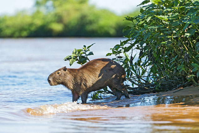 Bresil Pantanal