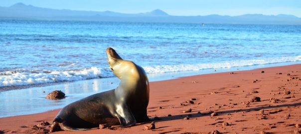 Galapagos iles Equateur voyage lion de mer