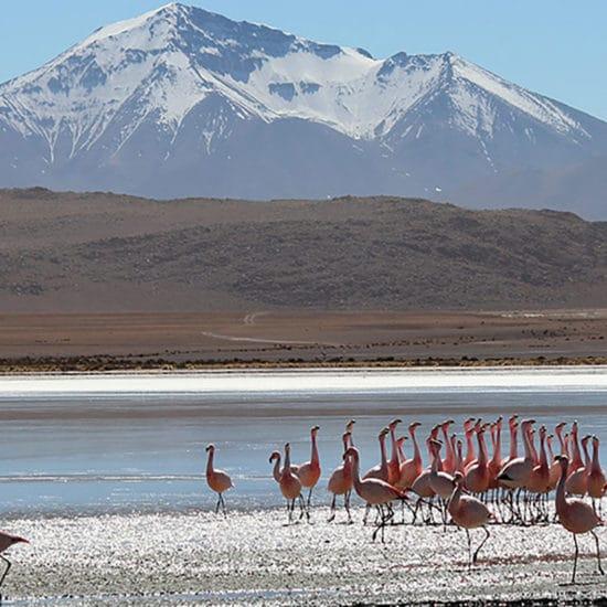 Bolivie desert sud Lípez