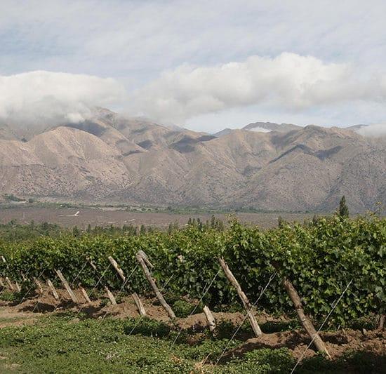 argentine cafayate nord ouest argentin vigne vin raisin viticulture montagne vignoble le plus haut du monde nature agriculture locale