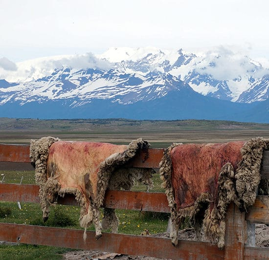 argentine el calafate immersion dépaysement nature randonnée glaciers perito moreno patagonie estancia balade cheval montagne