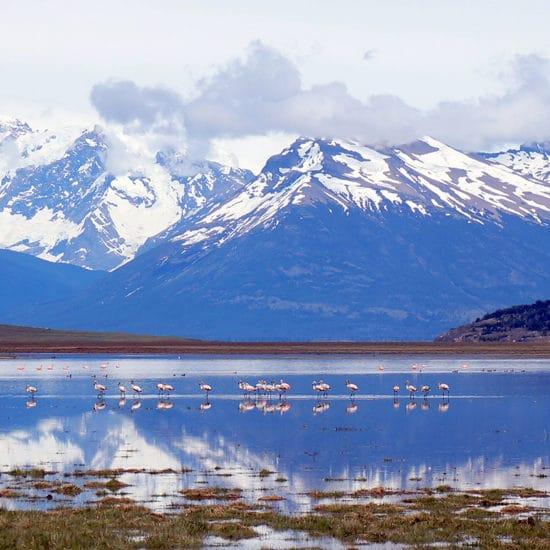 argentine patagonie glaciers trek trekking randonnée nature immersion montagne lac flamands roses faune