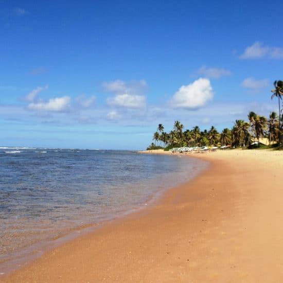 Bresil Plage do forte mer palmiers