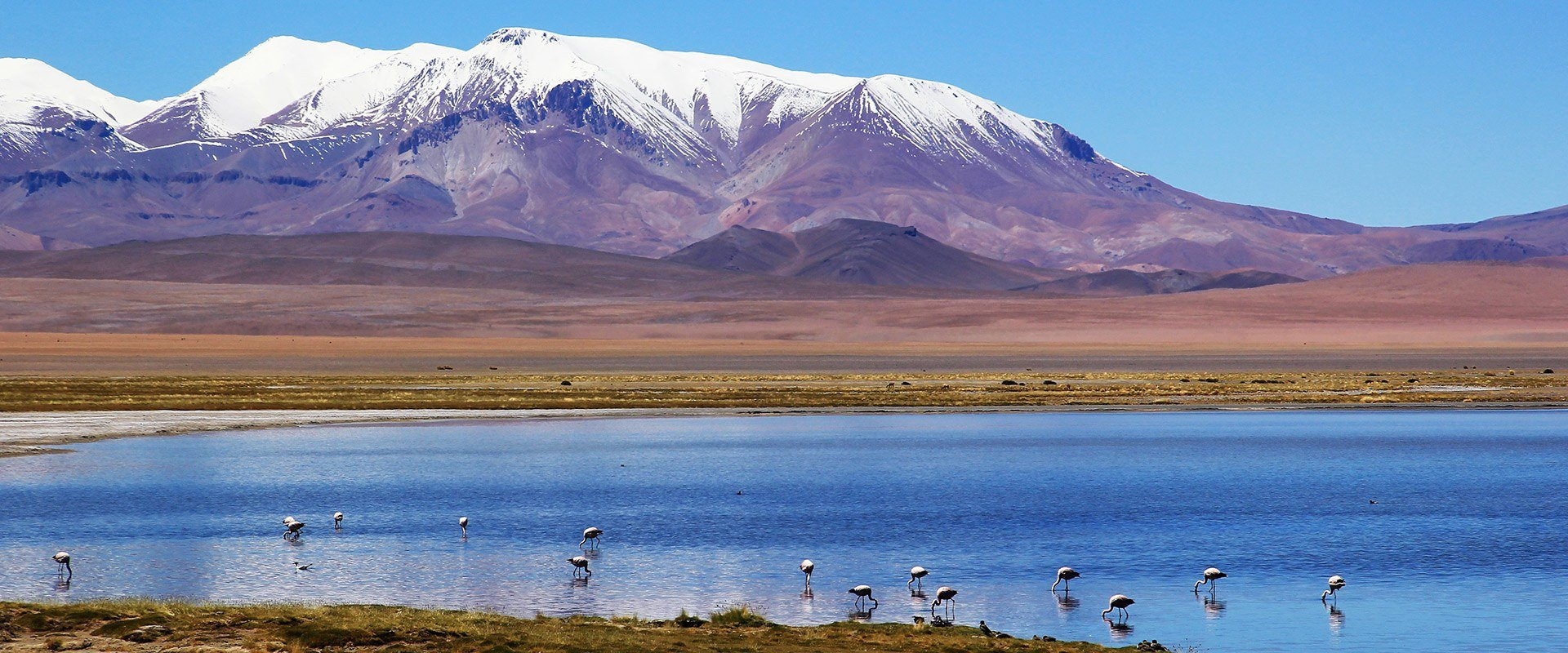 Chili altiplano salar de tara flamants roses lac montagne nature