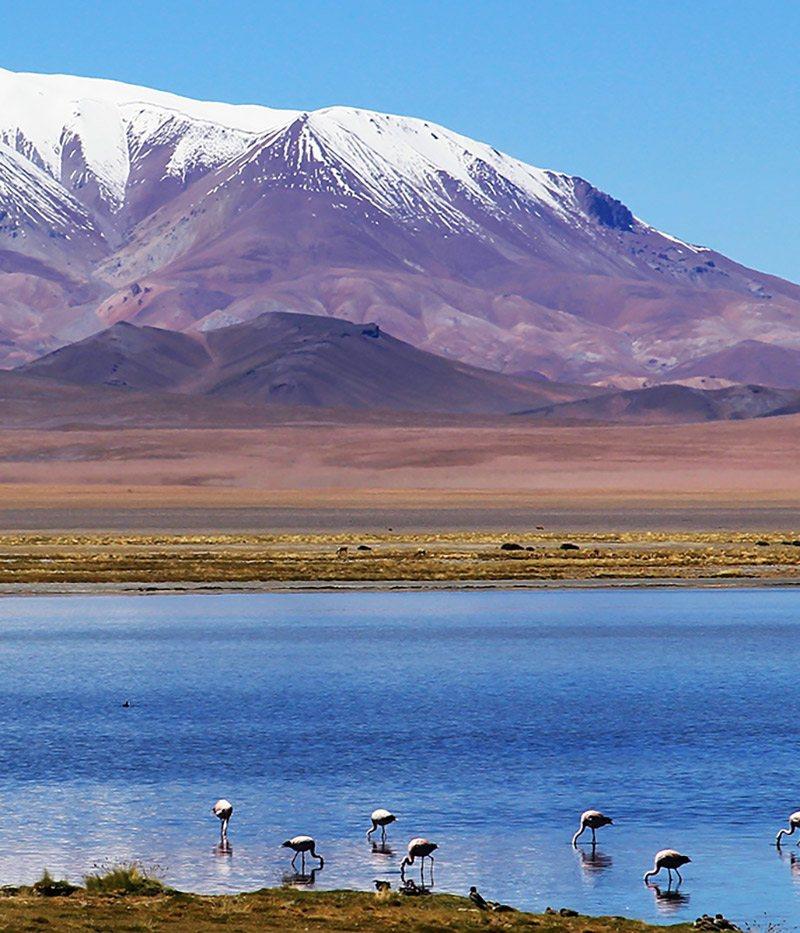 Chili altiplano salar de tara flamants roses lac montagne nature