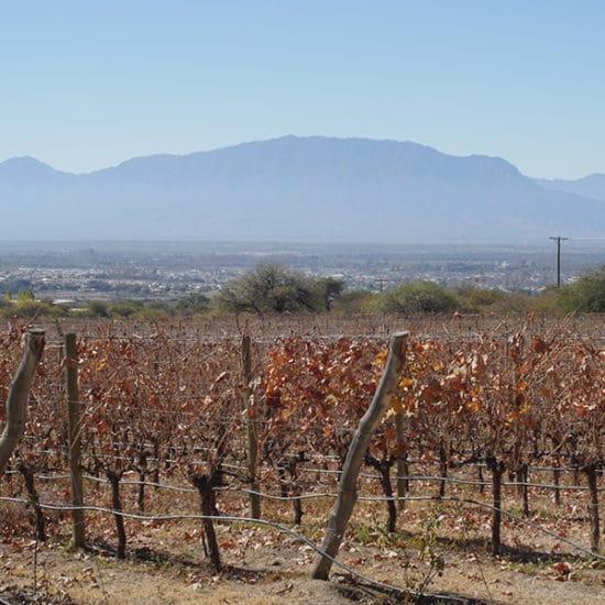 argentine salta nord ouest argentin immersion quebrada de humahuaca vin vignoble vigne la plus haute du monde