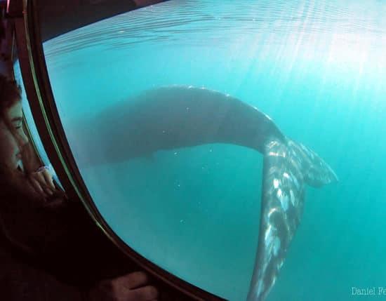 argentine puerto madryn péninsule baleines découverte faune mammifère marin observation patagonie