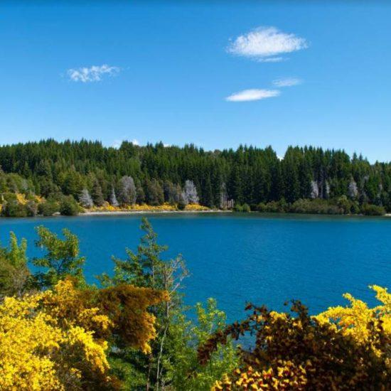 argentine patagonie 7 lacs bariloche nature paysage parc national montagne cordillère andes flore fleurs jaunes forêt