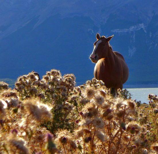 argentine estancia nibepo aike cheval nature faune campagne lac montagne dépaysement balade randonnée parc des glaciers patagonie