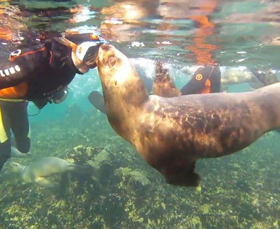 argentine puerto madryn péninsule phoques découverte faune mammifère marin observation patagonie plonge plongée sous marine