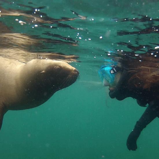 argentine puerto madryn péninsule phoque découverte faune mammifère marin observation patagonie plonge plongée sous marine proximité
