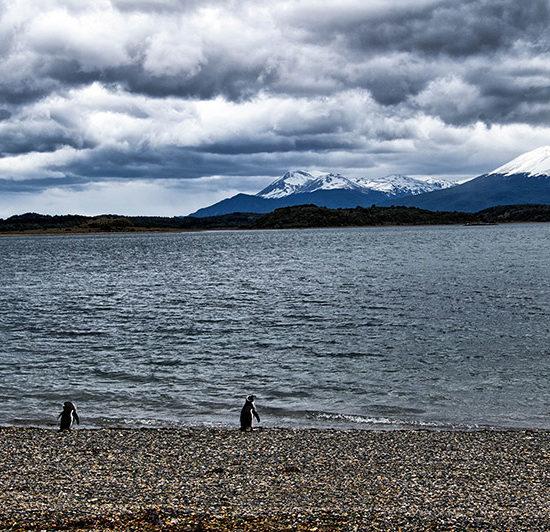 argentine patagonie parc national terre de feu canal de beagle puerto almanza montagne manchot de magellan nature hostile sauvage