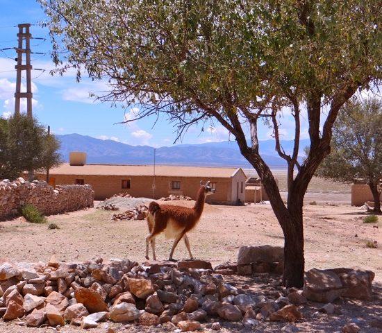 argentine salta nord ouest argentin nature lama quebrada de humahuaca désert village