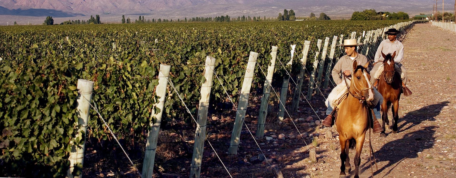 argentine vin vigne vignoble culture patrimoine montagne mendoza gauchos cheval vigneron viticulteur