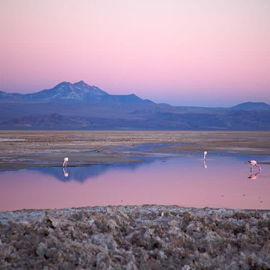 chili désert atacama flamants roses montagne coucher de soleil rose