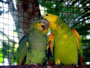 Bresil parc aux oiseaux tierra latina