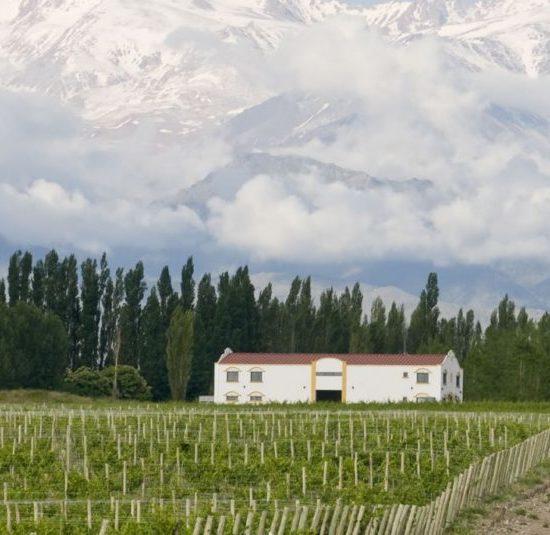 argentine vin vigne vignoble culture locale gastronomie patrimoine mendoza vigneron viticulteur ferme agriculture montagne