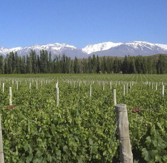 argentine mendoza montagne nature aconcagua vin vigne vignoble vallée