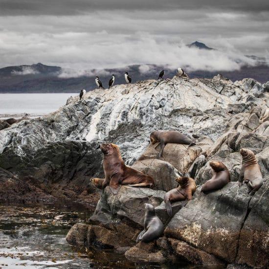argentine patagonie parc national de la terre de feu ushuaia bout du monde immersion canal beagle nature oiseaux faune lions de mer milieu hostile