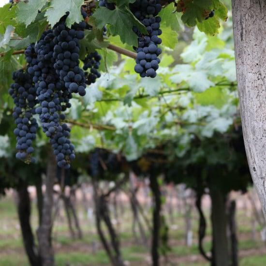 tierralatina-degusation-vins-buenos-aires-paul-lucyk