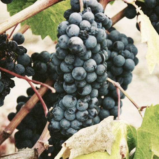 tierralatina-degustation-vins-buenos-aires-jassy-onyae