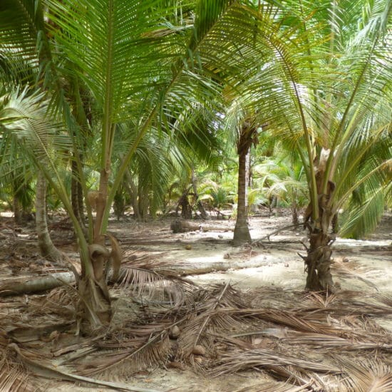 colombie tayrona flore palmiers forêt
