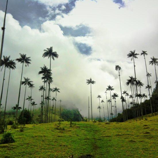 colombie vallée cocora palmiers brume flore