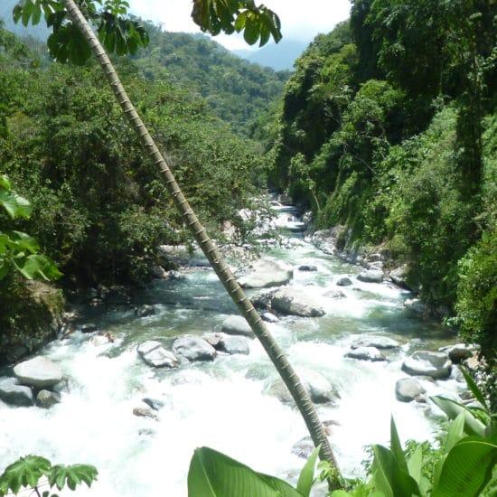 colombie chemin perdu santa marta rivière randonnée faune flore découverte