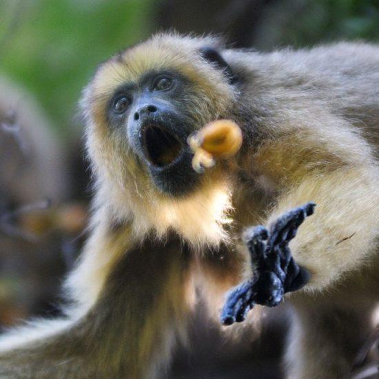 argentine estancia esteros del ibera nature corrientes singe observation faune