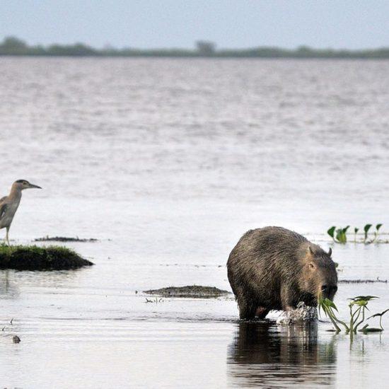 argentine estancia esteros del ibera nature corrientes lac réserve eau douce faune animaux