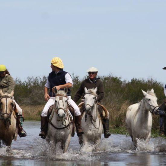 argentine estancia esteros del ibera gaucho cheval chevaux nature corrientes lac réserve eau douce